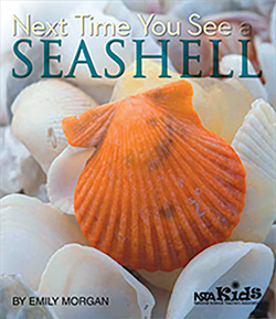 [Next Time You See a Seashell]