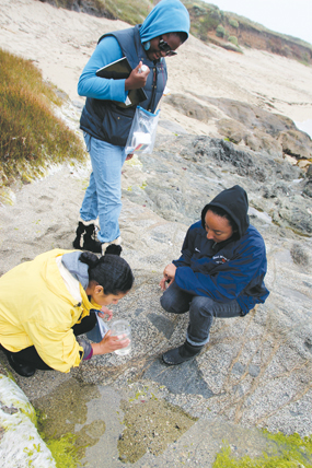 People conducting research on marine organisms on a beach
