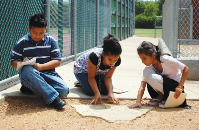 Students working on an environmental project