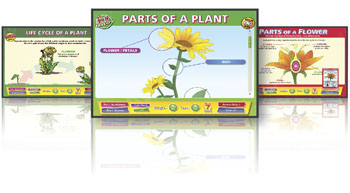 Interactive Whiteboard Charts: Plants and Flowers