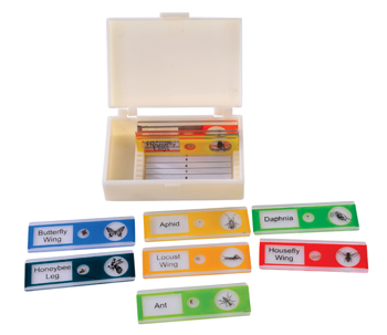 Elementary Micro-Slides Insects (Set of 10)
