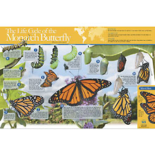 Monarch Butterfly Life Cycle Poster