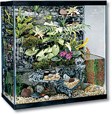 30 Gallon Aquatic Plants and Animals Materials Card